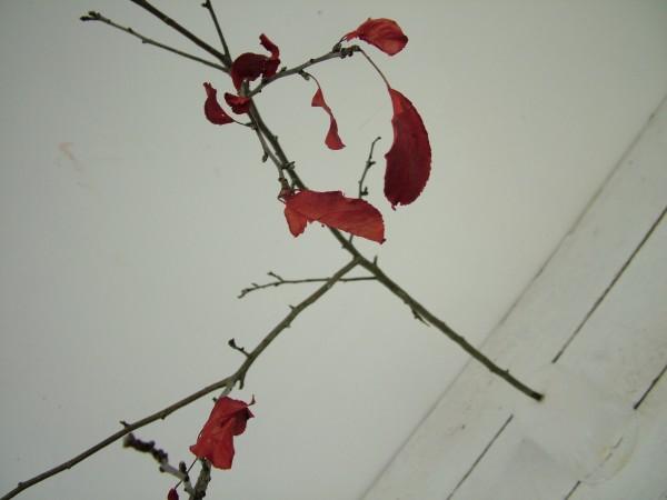 Falling Branch